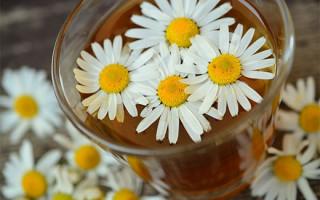 Ромашковый чай: эффективность, польза и вред для похудения