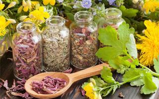 Обзор самых эффективных травяных сборов для похудения